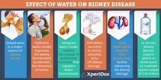 Everyone knows that drinking water is good for health. Drinking ample water will stave off various diseases, including Chronic kidney disease. However if you have kidney diseases beware of 'aggressive fluid loading' as it can have harmful side effects. Kidney Infection Causes, Kidney Failure Symptoms, Acute Renal Failure, Chronic Kidney Disease, Find A Doctor, Rare Disease, Side Effects, Drinking Water, Disorders