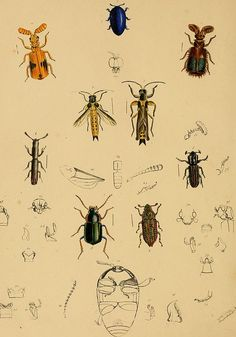 Category:The cabinet of oriental entomology - Wikimedia Commons