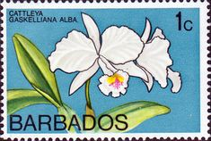 Barbados 1974 Orchids SG 489 Fine Used Scott 400 Other West Indies Stamps HERE