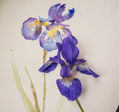 Watercolour Lesson: Paint an Iris flower with Angela Fehr
