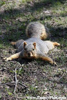 Funny Squirrels – Funny Squirrel Picture 70 (FunnyPica.com)