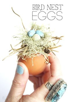 bird nest eggs - alisaburke