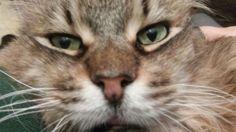 Carmen Ems, Animals, Animales, Animaux, Emergency Medicine, Animal, Animais