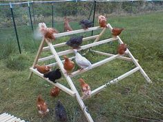Lantliv, höns Types Of Chickens, Keeping Chickens, Pet Chickens, Raising Chickens, Urban Chickens, Diy Toys For Chickens, Chicken Life, Chicken Runs, Chicken Houses