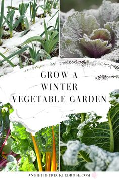 Starting A Winter Vegetable Garden | Angie The Freckled Rose Organic Gardening, Gardening Tips, Vegetable Gardening, Sustainable Gardening, Indoor Gardening, Sustainable Living, Indoor Plants, Winter Vegetables, Growing Vegetables