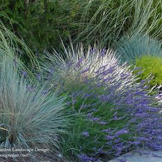 Plant Combinations - Northern California Gardens