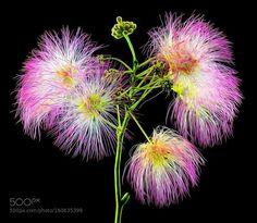 Fiore di campo 6