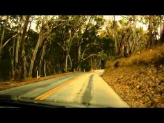 Driving through eucalyptus grove in Montana de Oro State Park CA