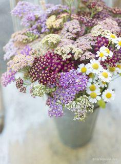 Summer flowers by Georgianna Lane