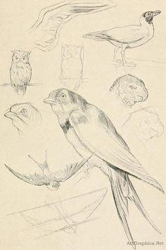 drawing birds, beginner art book