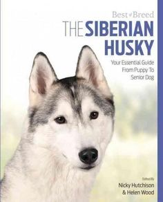 The Siberian Husky: Your Essential Guide from Puppy to Senior Dog