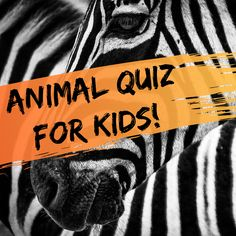 Multiple-Choice Quiz for Kids: Fun Animal Trivia Questions