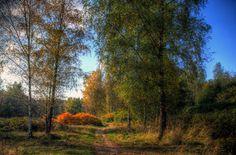 Autumn III by Watze D. de Haan