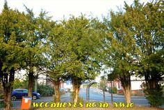 Woodheyes Road. Willesden NW10