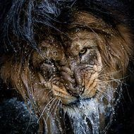 Eyes Water Photo by Eric Esterle -- National Geographic Your Shot