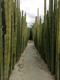 jardin etnobotanico, oaxaca.