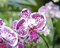 #orchidshow  www.nybg.org