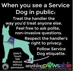Follow Service Dog Etiquette.
