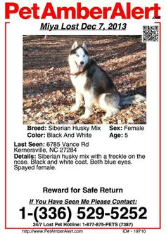 #PET #AMBER #ALERT: #Lost black/white female #Siberian #Husky #Kernersville, #NC Please help to locate this #missing #dog by sharing this poster and details with all of your friends and family members.