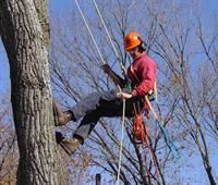 Tips about arborists