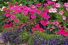 Flower Gardens In Usa