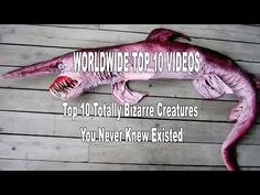 Top 10 Totally Bizarre Creatures You Never Knew Existed - YouTube