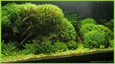 Aquascaping Beispiele : ... images about aquascapes on Pinterest Aquascaping, Aga and Aquarium