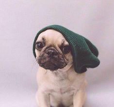 hipster pug.