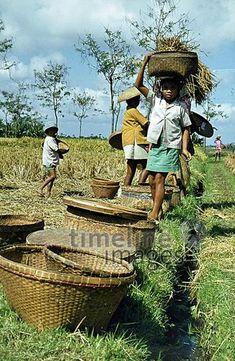 Reisernte auf Bali, 1974 hwh089/Timeline Images #70er #70s #colorphotography #retro #nostalgic #vintage #historisch #historical #indonesia #indonesien #bali #work #arbeitswelt #bamboo #basket #bamboobasket #Bambuskorb #Ernte #field #Feld #Feldarbeit #child #children #Kind #Kinder #Korb #agriculture #Landwirtschaft #people #Menschen #Mädchen #harvest #harvesting #riceharvest #Reis #rice #Reisernte #Reisfeld #riceplant #Reispflanze #Reispflanzen #arbeiten Hipster, Style, Fashion, Hipsters, Moda, La Mode, Fasion, Fashion Models, Trendy Fashion