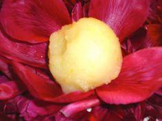 cuisine sauvage: sorbet aux fleurs de sureau