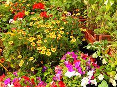 Una gran variedad de #Flores y #Plantas .