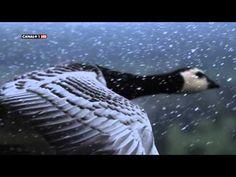 La Tierra Desde el Cielo Europa HD Documentales - YouTube