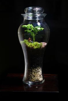 100+ Stunning Bonsai Terrarium for Miniature Landscaping in the Jars https://decomg.com/stunning-bonsai-terrarium-miniature-landscaping-jars/