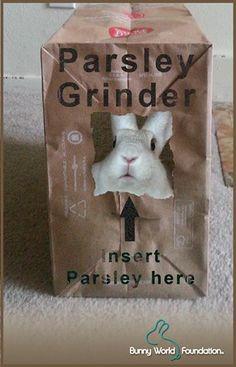 Parsley Grinder