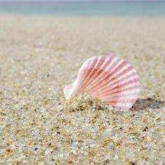 #ocean #beach #seashell