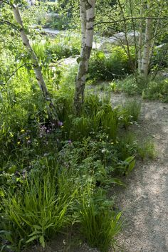 Gravel path with mixed plants