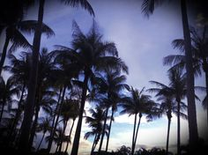Dream palms