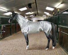 silver grullo