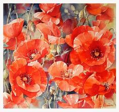 Poppies/coquelicots by Christian . Watercolor Poppies, Watercolor Paintings, Watercolors, Art Floral, Watercolor Pictures, Art Et Illustration, Color Pencil Art, Beautiful Paintings, Flower Art