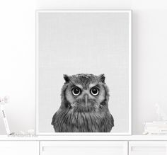 Owl Print, Owl Decor, Nursery Animal, Owl Printable, Owl Photo, Bird Photo, Wall Art Print, Black and White, Kids Room Decor, Photography by TheModernTrend on Etsy https://www.etsy.com/listing/279985294/owl-print-owl-decor-nursery-animal-owl