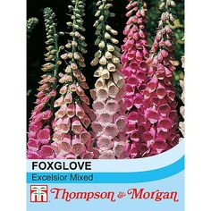 Foxglove 'Excelsior Hybrid Mixed' seeds from Thompson & Morgan - experts in the garden since 1855