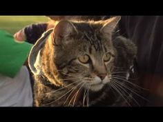 Cat who saved boy from dog attack gets to throw honoury baseball pitch