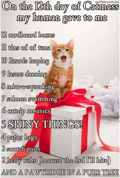 12 days of catmas Normally I hate that song, but this version I like!!