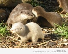 Otters OMG!!!!!!!!!!