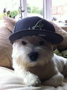 My name's Alvin!