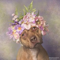 Too cute: Sophie said she chose to adorn the dogs with flower crowns in order to show the ...