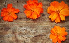 Orange Flowers Wallpaper HD Pictures One HD Wallpaper Pictures