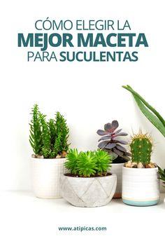 Cómo elegir la mejor maceta para tus plantas suculentas.  Cuál es la mejor maceta o contenedor para cultivar cactus y suculentas. Cuál es el mejor material de maceta: vidrio, plástico, cemento o concreto, terracota, cerámica, metal, etc.   Macetas, materas, ideas con suculentas, arreglos con suculentas, reciclar macetas. Tips, trucos y consejos para cultivar suculentas y cactus | Atípicas Suculentas. Cactus Y Suculentas, Succulents, Exterior, Organic, Green, Flowers, Plants, Projects, Diy