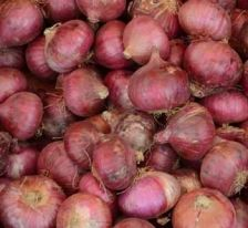 Onion prices likely to come down from next month