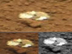 Curiosity Rover Found Rat 2013 - Pics about space